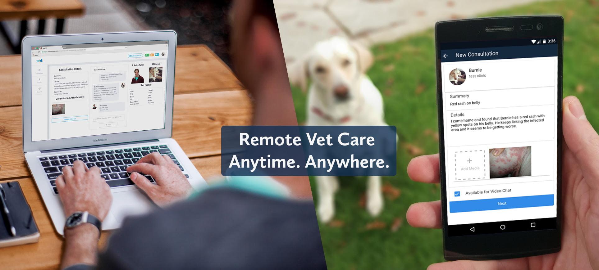 online vet visits